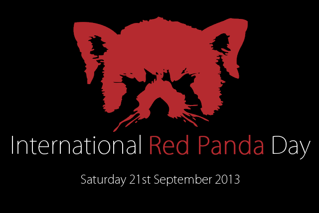 International Red Panda Day 2013! (1/3)