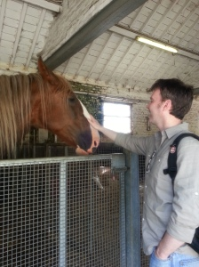 David and Clydesdale Horse