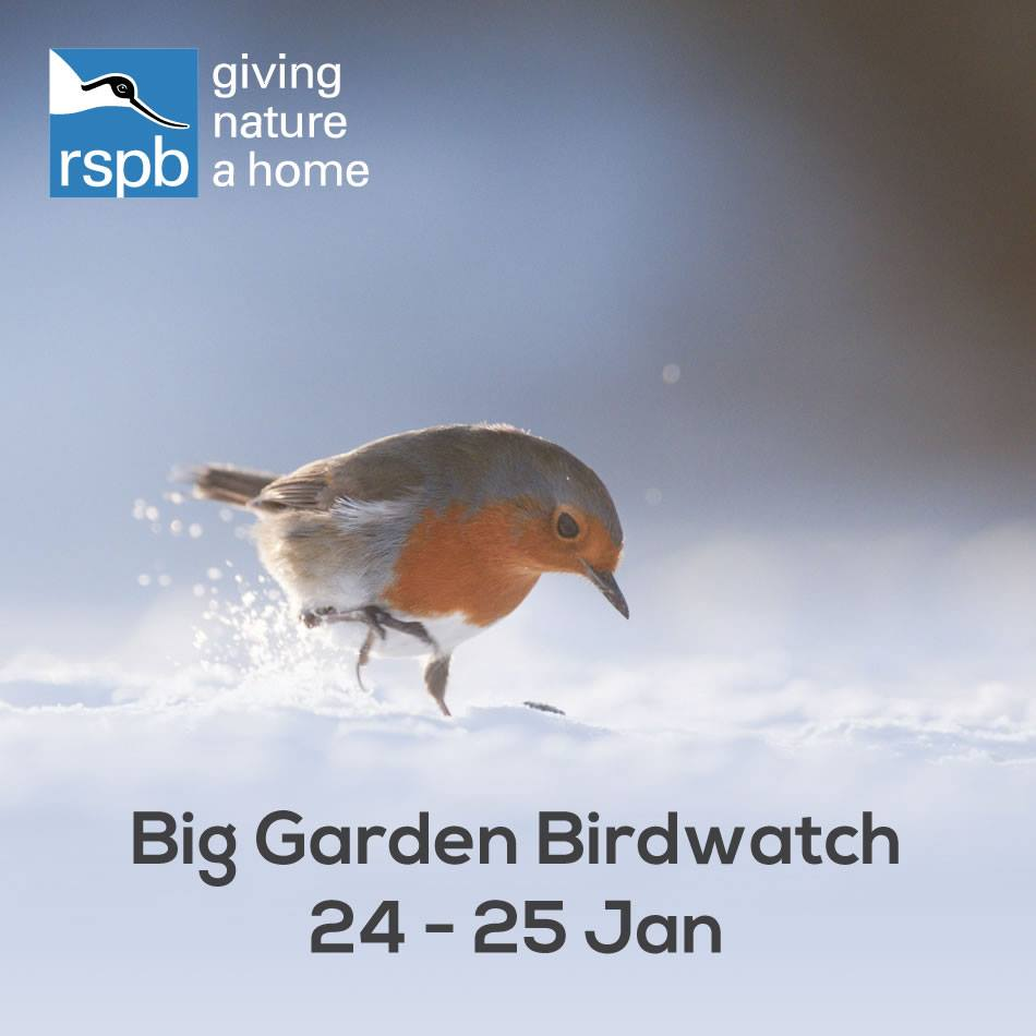 Big Garden Bird Watch 2015!