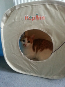 Artie in his play tunnel