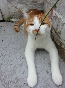 Artie smelling the chives!