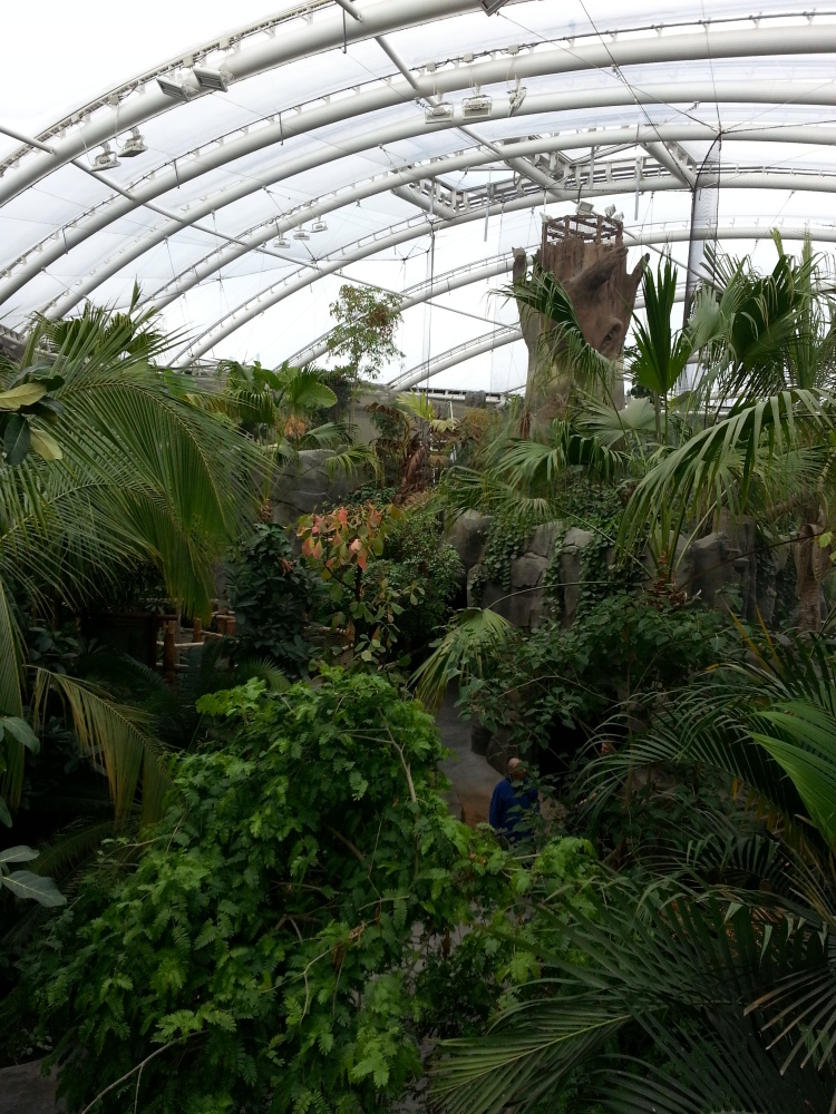 Monsoon Forest at Chester Zoo (4/6)