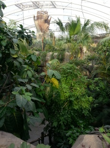 Monsoon Forest