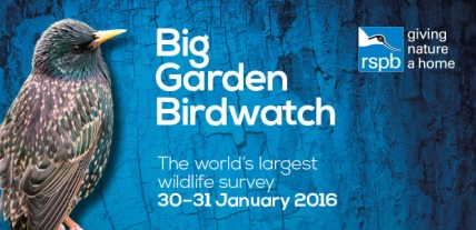 rspb-birdwatch-event[1]
