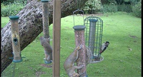 RSPB webcam 2