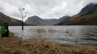 That tree, Buttermere