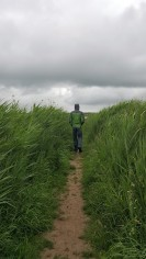 The path - Lunt Meadows