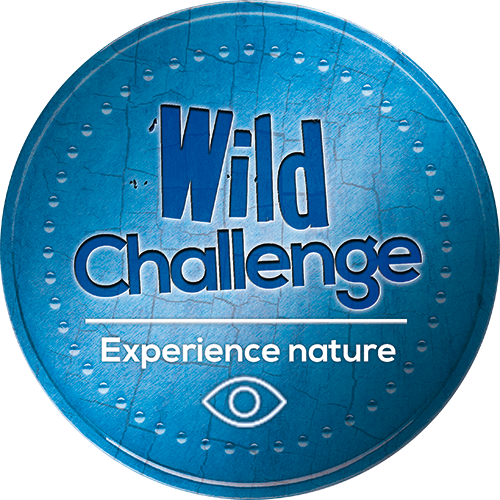 wild-challenge-blue-badge-experience