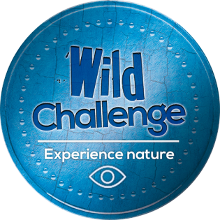 wild-challenge-blue-badge-experience
