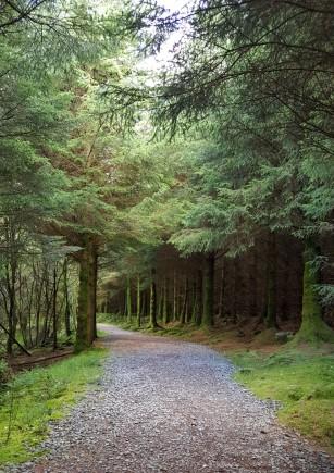 Beddgelert Forest