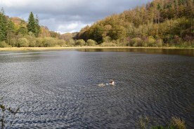 Swimming in Yew Tree Tarn