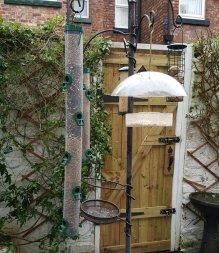 Clean bird feeders