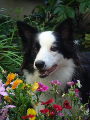 Riley among the flowers