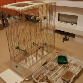 Cleaning finches' cage