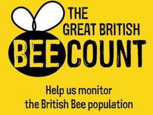 The Great British Bee Count