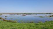 Lunt Nature Reserve