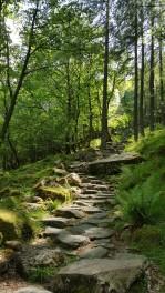 Path through Burtness Woods