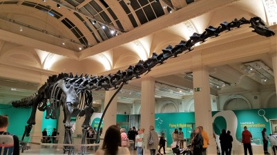 dippy2 (2)