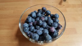 3pm to 4pm - harvest of blueberries