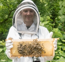 David and honey bees
