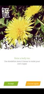 brew a leafy tea