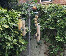 Clean bird feeders