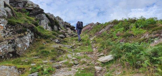 David on the path