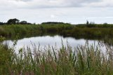 Lunt Meadows